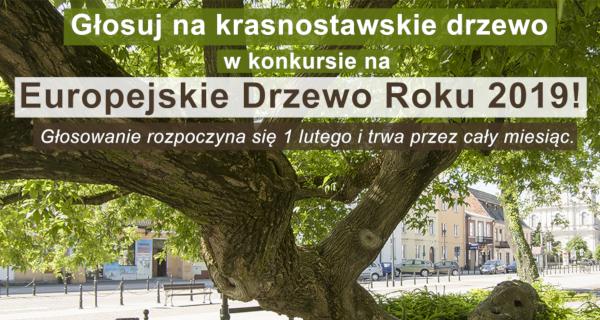 Europejskie Drzewo Roku 2019!